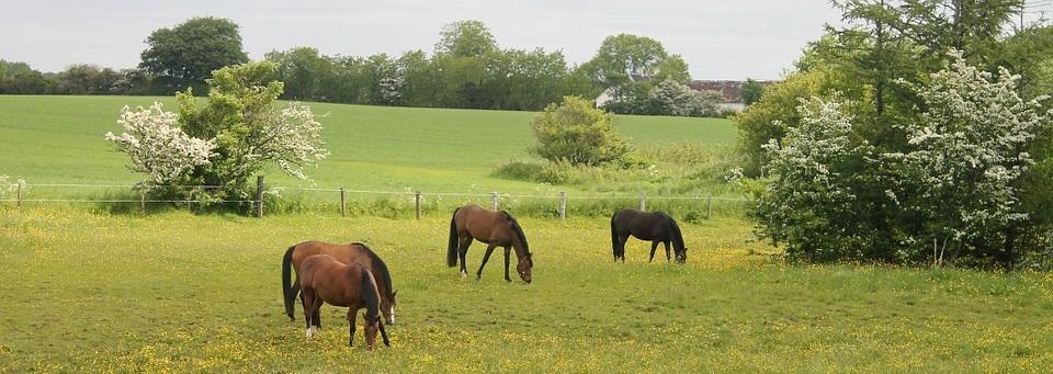 horses-867588_960_720