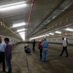 Innowacyjne rozwiązania na fermach drobiu [SPRAWOZDANIE]
