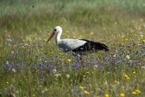 """3. Ptaki krajobrazu rolniczego – nieznane sylwetki naszych bliskich """"sąsiadów"""""""