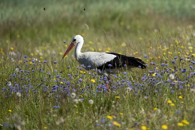 3 Ptaki Krajobrazu Rolniczego Nieznane Sylwetki Naszych Bliskich