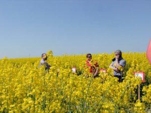 Śruta rzepakowa jako realna alternatywa dla importu soi – konferencja