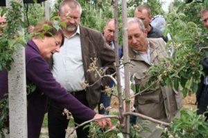 Monitoring występowania chorób jabłoni-Lisewo Kośc., Starorypin