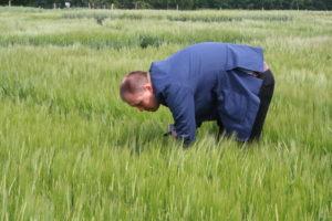 Wybrane problemy integrowanej ochrony zbóż i rzepaku