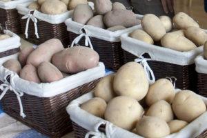 Święto Ziemniaka w Przysieku