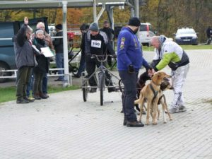 Wyścigi psich zaprzęgów – Minikowo 12.11, fotorelacja