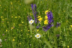 Kosmetyki z natury – wiejskie SPA (warsztaty)