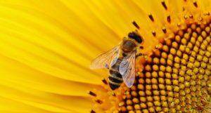 Promocja oraz upowszechnianie wiedzy o pszczelarstwie