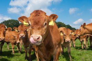 """Zapraszamy na wyjazd studyjny pt.  """"Promocja innowacji w hodowli bydła mięsnego podczas Europejskich Targów Hodowlanych w Clermount-Ferrand"""""""