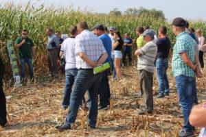 Powiatowy Dzień Kukurydzy w Rypinie (Linne)