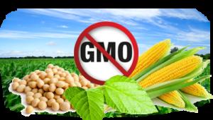 Wieprzowina bez GMO z kujawsko-pomorskiego