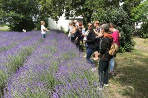 Bioróżnorodność w domu i w ogrodzie