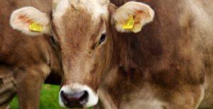 Dopłaty za dobrostan zwierząt