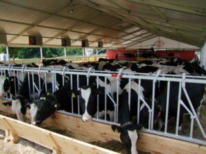 szkolenie – Ubój z konieczności, pozyskanie mięsa na użytek własny, rzeźnie rolnicze