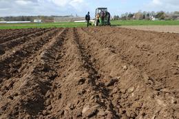 W Grubnie zasiano wcześnie kukurydzę i zasadzono ziemniaki