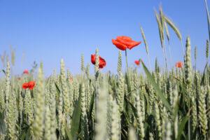 """Projekt """"Regeneratywna rewolucja w rolnictwie"""""""