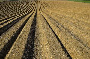 Regeneratywna rewolucja w rolnictwie